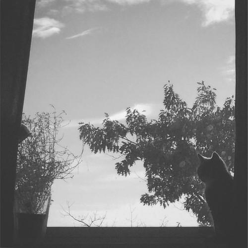 En af de der lækre morgenstunder som jeg går glip af når jeg ikke har fri fra arbejde. Lad os få det bedste ud af dagen! 😃 Måløv, Danmark, 2016. #taknemmelig #goddag #KAT