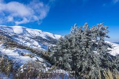 Harry_30869,,,,,,,,,,,,,,,,,,,Hehuan Mountain,Taroko National Park,Snow,Winter (HarryTaiwan) Tags:                   hehuanmountain tarokonationalpark snow winter       harryhuang   taiwan nikon d800 hgf78354ms35hinetnet adobergb mountain