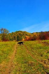 út az őszi réten / pass through autumn meadow (debreczeniemoke) Tags: ősz autumn táj land tájkép landscape színes színpompás colorful október october fa tree erdő forest rét meadow út road ösvény path kutya dog frakk olympusem5