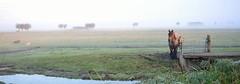 Foggy sunrise. (frankvanroon) Tags: foggy sunrise meadow maasland netherlands october morning horse nikon d7000 fog mist mistig nature natuur paard