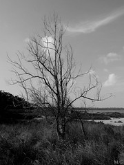 Lonely (Maribeljukebox) Tags: parquenatural lagunas lamata torrevieja naturaleza nature flamencos flamingos