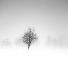 love affair (ArztG. Photo) Tags: snow minimal love affair fine art fog tree trees yup arztg photo cheers myfavs