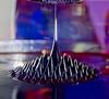 Ferrofluid (mjw_photo) Tags: canon650d sigma1770mmf284 sciencemuseum ferrofluid magnetic liquid