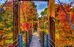 Suspension bridge and autumn leaves in  Expo memorial Park (bohem-tom) Tags: hdr osaka suita