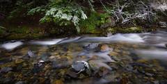 First Snow (dwolters2) Tags: snow cascades pentax k1 washington northwest happy thanksgiving winter