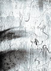 Glasshouse window abstract, toned B&W (CactusD) Tags: greenhouse glasshouse horticulture gardening landscape england nikon d800e fx texture uk unitedkingdom gb 24mmf35pce 24pce 24mm f35 pce tiltshift blackandwhite bw monochrome tilt shift abstract detail cs6 photoshop gradientmap toning blueselenium blue selenium