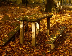 Leaves (Budoka Photography) Tags: autumnleaves flickrfriday leafs autumn canonllens canonfd50mmlf12 outdoor bench serene october nationalpark