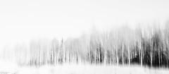 winter landscape (sami kuosmanen) Tags: luonto light landscape lumi suomi sky snow finland forest mets kuusankoski kouvola taivas tree talvi winter white long exposure nature north europe photography puu pitk valotus valo tumma trees