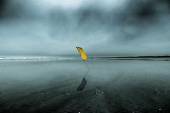 Flagshot (MARS KULT PLAZ) Tags: cote sauvage britany france see coast beach sand fog dizzy markus platz photographie marskultplatz