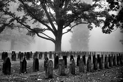 Festblick (2 von 5) (Festblick) Tags: black white schwarzweis hamburg ohlsdorf friedhof cemetary graveyard mist morning