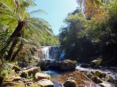 Halls Falls (LeelooDallas) Tags: australia tasmania pyengana halls falls waterfall tree water forest andscape dana iwachow fuji finepix hs20 exr