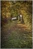 SECRET GARDEN (IAN GARDNER PHOTOGRAPHY) Tags: secretgarden autumn fall footpath autumnleaves autumngold publicfootpath bridleway view landscape nature