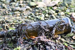 Penryn Quay, Cornwall, (cazzycoffeegirl) Tags: bottle beach penryn