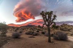 Sunset in the high desert (brudy0918) Tags: sunset desert joshuatree california