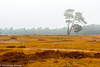 Groot-Heidestein-1 (christiaan.oomes) Tags: nikcolorefexpro autumn november landscape tamron nederland utrecht netherlands herfst d7200 heidestein