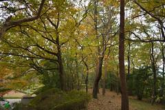 Dream of Dream (kzmiz) Tags: nikond800e japan saitama hikigun namegawamachi yamada musashi shinrin koen park