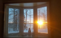 Be Thankful (mazzmn) Tags: sunrise trees winter thankful thanksgiving blinds venetian gold peaceful flare three