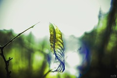 """""""I'm a lead on the wind""""  For more examples of my work head over to  www.facebook.com/standeasycostumesandart  #nature #thelensbible #pretty #blue #light #love #green #weather #day #mothernature #beautiful  #color #capture #moment #sunset #detail #natural (Photography by Anthony Davies) Tags: instagramapp square squareformat iphoneography uploaded:by=instagram lark"""