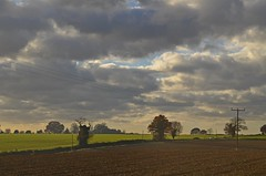 Autumn Landscape (DaveJC90) Tags: suffolk village playford view landscape autumn winter sun sunny sunlight light bright sky blue cloud cloudy dark shadow walk walking afternoon path footpath church building old classic stone field cow animal creature blakc brown green grass colour colours crop croped nikon d5100 digital slr camera wide angle zoom lens 1020mm 1855mm detail sharp sharpness