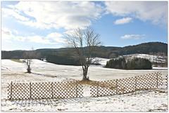 wintertime (mayflower31) Tags: winter zaun fence baum tree himmel sky wolken clouds