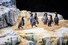 Chile 2013-3738 (sebtac) Tags: chile2013 chile 2013 outdoor 13 reserva nacional pingüino de humboldt