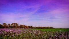 Fairoul 312 (Yasmine Hens) Tags: fairoul 7dwf 7dayswithflickr landscape hensyasmine namur belgium wallonie europa aaa  belgique blgica    belgio  belgia   bel be