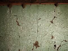 Impact of Swallow excreta (heritagefutures) Tags: bird abandoned pug german impact nsw homestead poo swallows edgehill nesting excreta pinebuilt