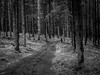 Bavarian Forest (1mpl) Tags: bw monochrome germany bavaria travelphotography bavarianforest niksilverefexpro olympusomdem1