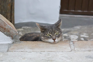 Un gato en la calle - A cat in the street