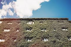 Jungle rising (tropeone) Tags: blue summer sky urban building nature 35mm helsinki apartment vegetation tl nokton voigtlnder vsco vscofinland