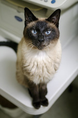 Sinatra - 13 year old neutered male