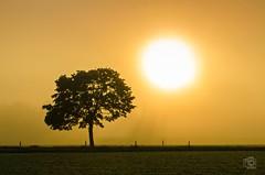 Foggy Sunrise (jennifer.stahn) Tags: autumn sun fog sunrise nikon nebel jennifer herbst sonnenaufgang ruhrgebiet ruhrpott mülheim stahn d7000