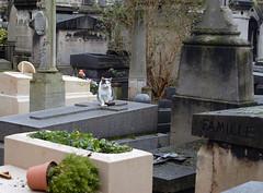 Cats (2) on Tombstones in Cimetière de Montmartre (carolemason) Tags: cats paris tombstones cimetièredemontmartre