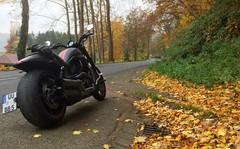 2015-10-31 iP JB 3747b#coht40s30ER (cosplay shooter) Tags: vrscdx x201811 700x harley harleydavidson moto motorcycle motorrad vrod nightrodspecial herbst autumn fall 500z