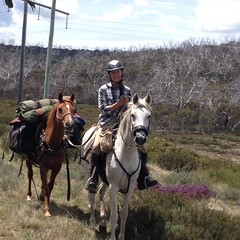Horse campers (bribriwaldron) Tags: horses bnt aawt