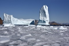 _DSC9137 (TC Yuen) Tags: glacier arctic greenland whales iceberg crusing floatingice polarregion greenlandeast