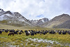 Yak At Shimshal Pass | Pamir (Fareed Gujjar - Next Mount Everest April 14) Tags: autumn pakistan lake beautiful scenery north hunza farid pamir fareed ghizer skardu phandar gupis mashabrum shimshalpass faridgujjar fareedgujjar mangliksar northeran yaksarai