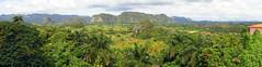 Balcon de Valley, Vinales (Ludovic Farine) Tags: travel las summer tree green nature forest landscape holidays view havana cuba palm jungle caribbean cuban habana vinales revolucion terrazas