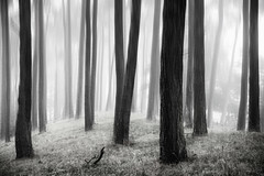 The rain (47/50) (Stuart Stevenson) Tags: uk trees rain photography scotland rainy morerain lanark clydevalley evenmorerain stuartstevenson wwwzerogravitymeuk