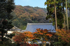Engakuji Temple 2014 (Propangas) Tags: travel autumn fall colors japan temple kamakura jp