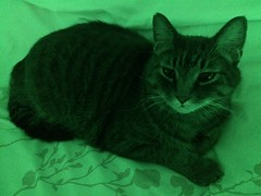 Our cat Victor (alexkeywest) Tags: green kitty keywest mycat funnycat lovelycat