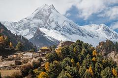 Manaslu and Lho Gompa I (Andrew Luyten) Tags: nepal mountain buddhism himalaya lho gompa manaslu westernregion manaslucircuit mountainkingdoms 8156m