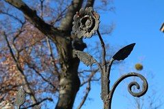 mimicry (franckreich) Tags: flowers light urban sun tree art metal fence rust europe hungary time budapest urbanexploration mimicry