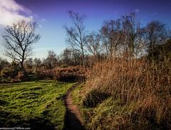 Runcorn Heath Park (1 of 6) (andyyoung37) Tags: uk england statue cheshire unitedkingdom bluesky gb autumntrees runcorn merseyside woodlandpath heathpark