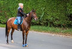Waterloo-Lasnes 2016 (saigneurdeguerre) Tags: canon 5d mark iii 3 europe europa belgique belgi belgium belgien belgica ponte antonioponte aponte ponteantonio saigneurdeguerre wallonie brabant wallon waterloo lasnes cheval paard caballo cavalo horse