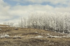 Coldly burns the sun (Tracey Rennie) Tags: frost trees winter alberta cochrane clouds sliderssunday