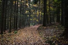 forest (tewhiufoto) Tags: tewhiu tewhiufoto nikon flickr czrepublic southbohemia forest autumn umava bohemiaforest bhmerwald czechia nature trees wald sigma30mmf14exdchsm sigma primelens
