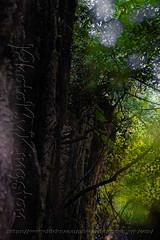 DSCF7203 (kingston Tam) Tags: waterfall river rapids sedimentaryrock stone ancientcity guizhou wetlandpark park canyon landscape naturallandscape mountain scenery streetscape oldfashioned streetphotography castle hawkers peddler fujifilmxt1
