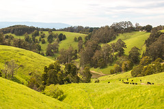 The scale of things (shyamgn) Tags: farm green cows pond trees westgippsland strzeleckiranges victoria canon70d sigma1750