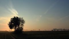2016_10_02_04917 (bencze82) Tags: hévízgyörk hungary magyarország morning reggel fények lights fog köd landscape tájkép canon eos 700d voigtländer colorskopar 20mm sky tree sunrise